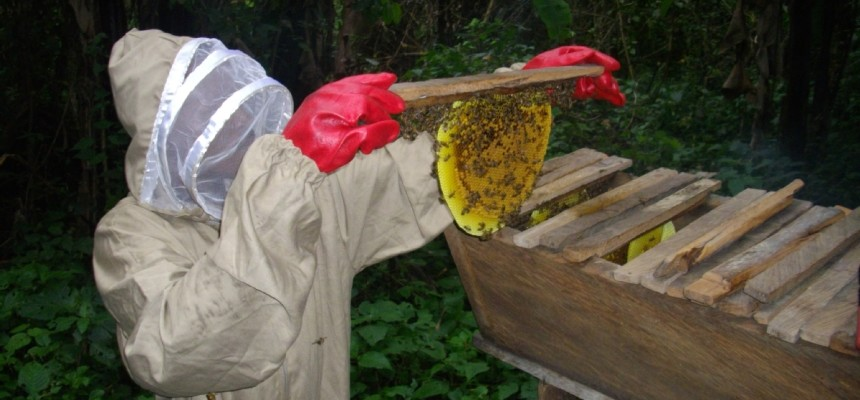 Bee Hives Support